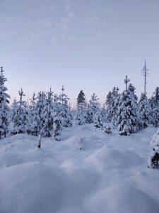 joulukortti-sähköinen-liiketoiminta-suomi-oy